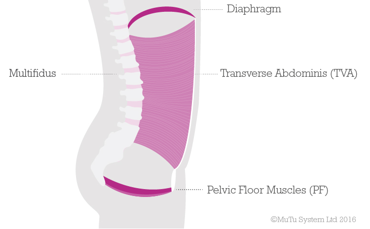 Pelvic-floor-diagram-blogimage