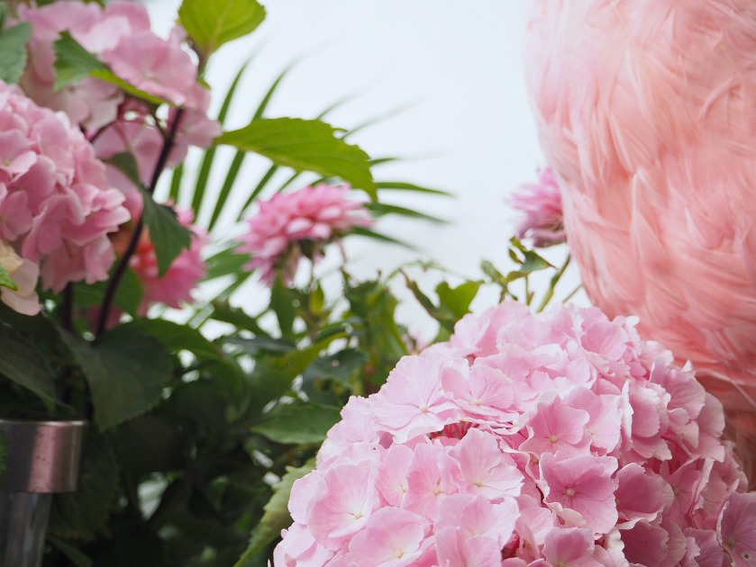 Pink Flamingo Hydrangea